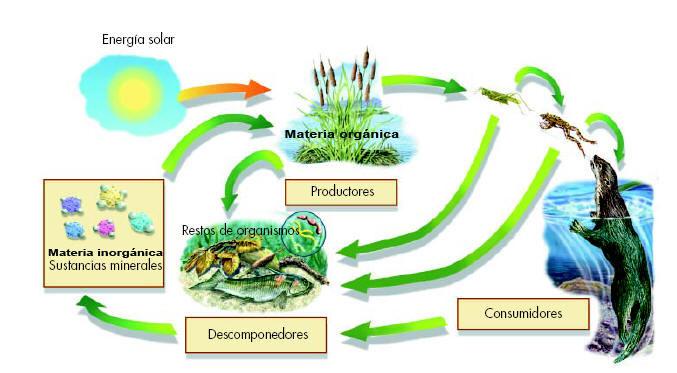 TEMA 12. Los ecosistemas.